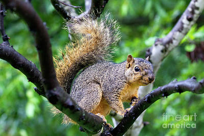 Photograph - A Squirrel's Gaze by Alycia Christine