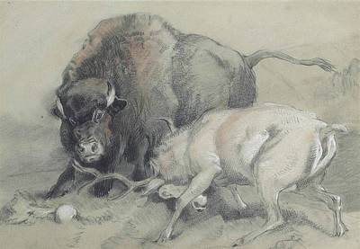 A Stag Challenging A Bison Art Print