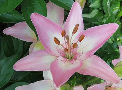 Photograph - A Star Of Day by Jeanette Oberholtzer
