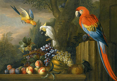 A Still Life With Fruit Parrots And A Cockatoo Art Print by Jakob Bogdani