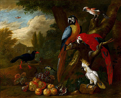 A Still Life With Fruit Parrots Art Print by Jakob
