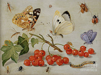 Nature Study Painting - A Still Life With Sprig Of Redcurrants, Butterflies, Beetles, Caterpillar And Insects by Jan Van Kessel