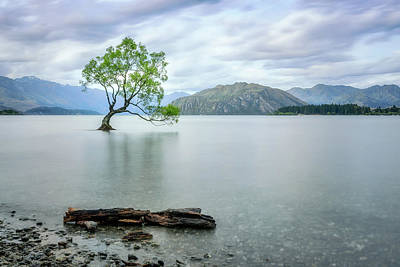 Photograph - A Story Of Beauty And Survival At Wanaka Lake. by Daniela Constantinescu