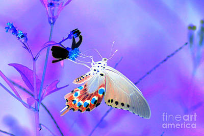 Photograph - A Strange Butterfly Dream by Kim Pate