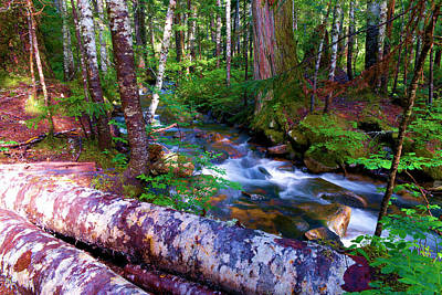 A Stream Through The Forest  Art Print by Jeff Swan