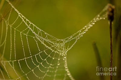 Photograph - A String Of Pearls by Liz Alderdice