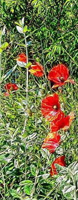 Photograph - A Strip Of Poppies by Dorothy Berry-Lound
