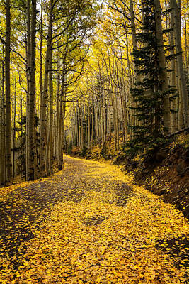 A Stroll Among The Golden Aspens  Art Print