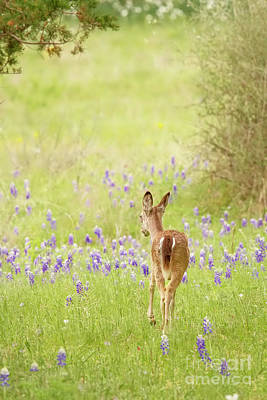 Photograph - A Stroll In The Bluebonnets by David Cutts