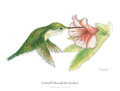 Hummingbird Drawing - A Stroll Through The Garden by David Weaver