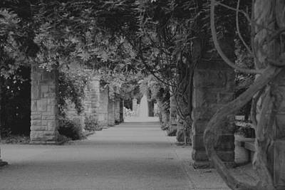 A Stroll Under The Vines Bw Art Print