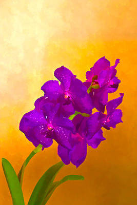Mixed Media - A Study In Orchid by Ches Black