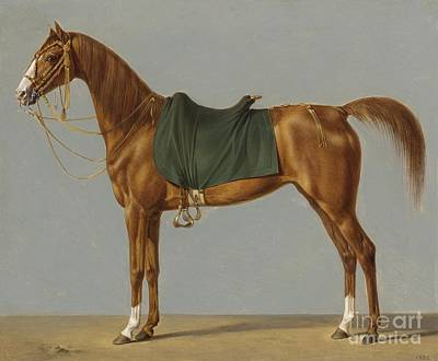 A Study Of A Horsegerman Art Print by MotionAge Designs