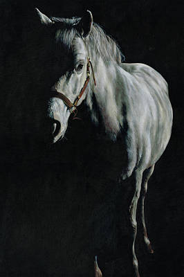 Canter Painting - A Study Of A Pony In The Shadows by Richard Mountford