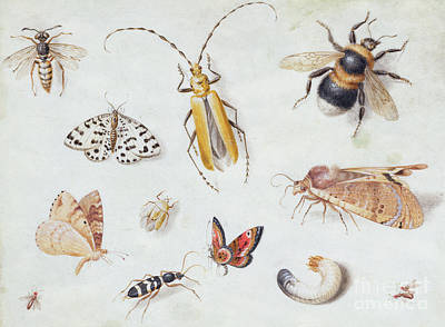 Nature Study Painting - A Study Of Butterflies And Other Insects by Jan Van Kessel the Elder