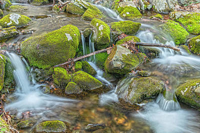 Photograph - A Study Of Moss And Water Horizontal Perspective by Angelo Marcialis