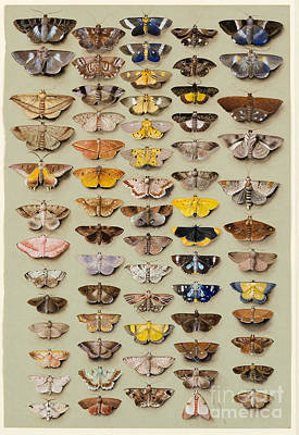 Characteristics Painting - A Study Of Moths Characteristic  by MotionAge Designs