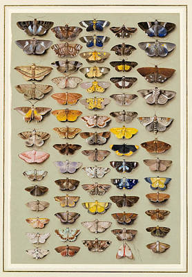 Characteristics Painting -  A Study Of Moths Characteristic by Marian Ellis