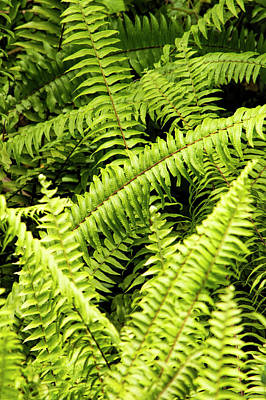Photograph - A Study Of Random Ferns by William Tasker