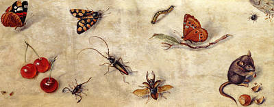 A Study Of Various Insects, Fruit And Animals Art Print by Jan Van Kessel the Elder