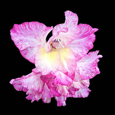 Flowering Plants Digital Art - A Succulent Gladiola by Martin Wall