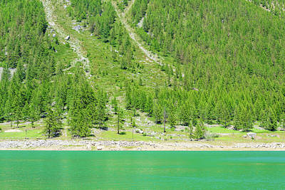 Suggestive Photograph - a suggestive green mountain lake along a slope covered with pine trees in the Park of Great Paradise by Susanna Mattioda