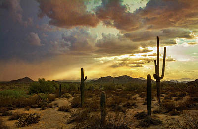Photograph - A Summer Evening In The Sonoran  by Saija Lehtonen