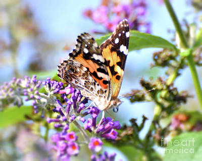 Photograph - A Summer Lady - Painted Lady Butterfly by Kerri Farley