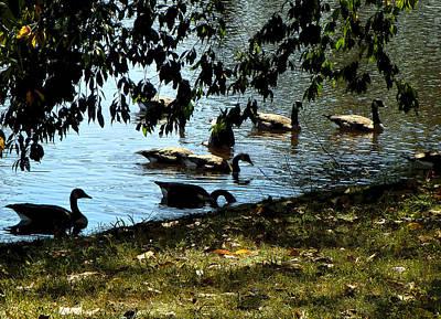 Canadian Geese Digital Art - An Autumn Swim by Mindy Newman
