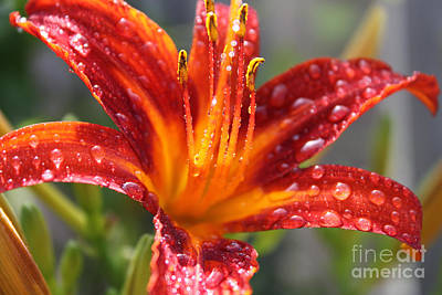 Photograph - A Summer's Passion by Cathy  Beharriell