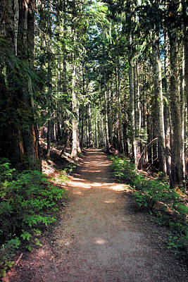 Sun Soaked Photograph - A Sun Lit Trail Through The Forest by Jeff Swan