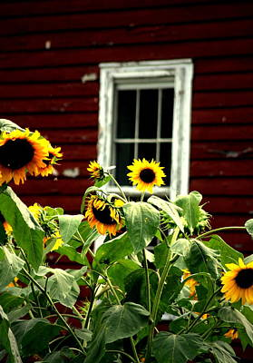 Sunflower Photograph - A Sunflower Kind Of Day by Emily Stauring