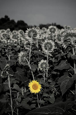 Photograph - Dare To Be Different by Anthony Doudt