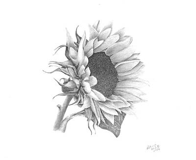 Drawing - A Sunflowers Beauty by Patricia Hiltz