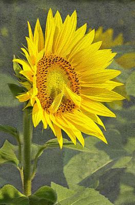 A Sunflower's Prayer Art Print