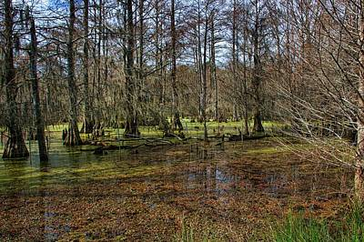 Photograph - A Sunny Bayou by Diana Mary Sharpton