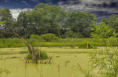 Photograph - A Swamp Thing by JRP Photography