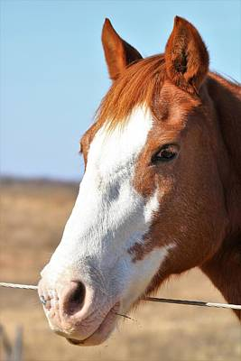 Photograph - A Sweet Face - Horse Portrait by Sheila Brown