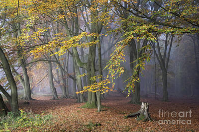 Photograph - A Tale Of Two Paths by Tim Gainey