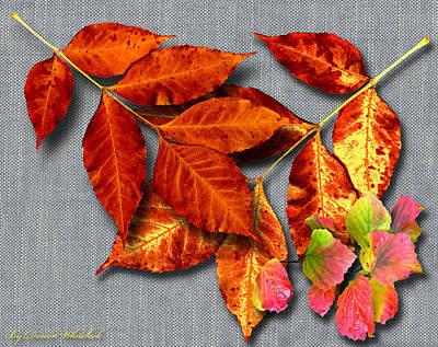 Photograph - A Taste Of Fall II by Doreen Whitelock