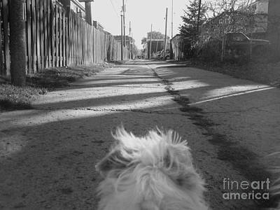 Photograph - A Terriers Perspective by Reb Frost