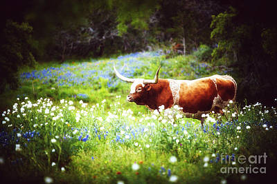 Longhorn Bluebonnet Photograph - A Texas Longhorn And Wildflowers by Katya Horner