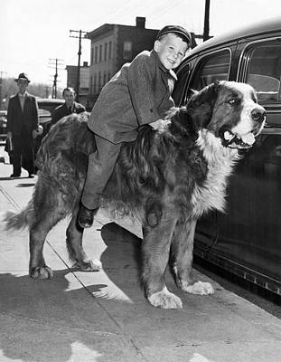 St Bernard Photograph - A Three Year Old Boy Takes A Ride On A St. Bernard. by Underwood Archives