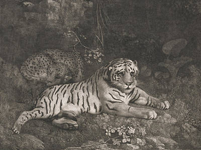 Relief - A Tiger And A Sleeping Leopard by George Stubbs