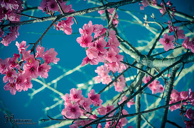 Photograph - A Time To Blossom by Karen Musick