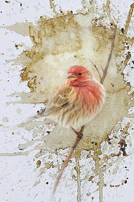 Photograph - A Tiny Splash Of Red Songbird Art by Jai Johnson