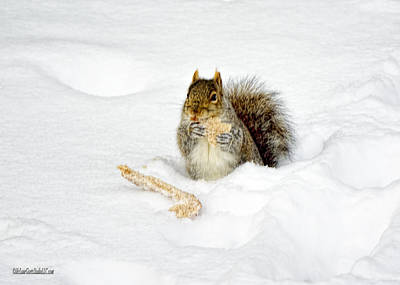 Ice Photograph - A Toast To Baby Squirrels by LeeAnn McLaneGoetz McLaneGoetzStudioLLCcom