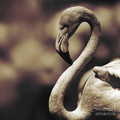 Photograph - A Toned Tickled Pink Flamingo  by Paul Davenport
