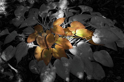 Photograph - A Touch Of Autumn Light by Donna Kennedy