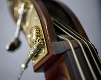 Double Bass Photograph - A Touch Of Bass by William Oswald
